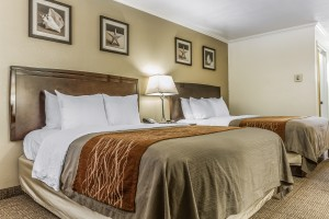 Comfort Inn Santa Cruz - Guest Room with 2 Queen Beds